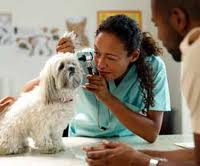 A veterinarian checks out a small dog